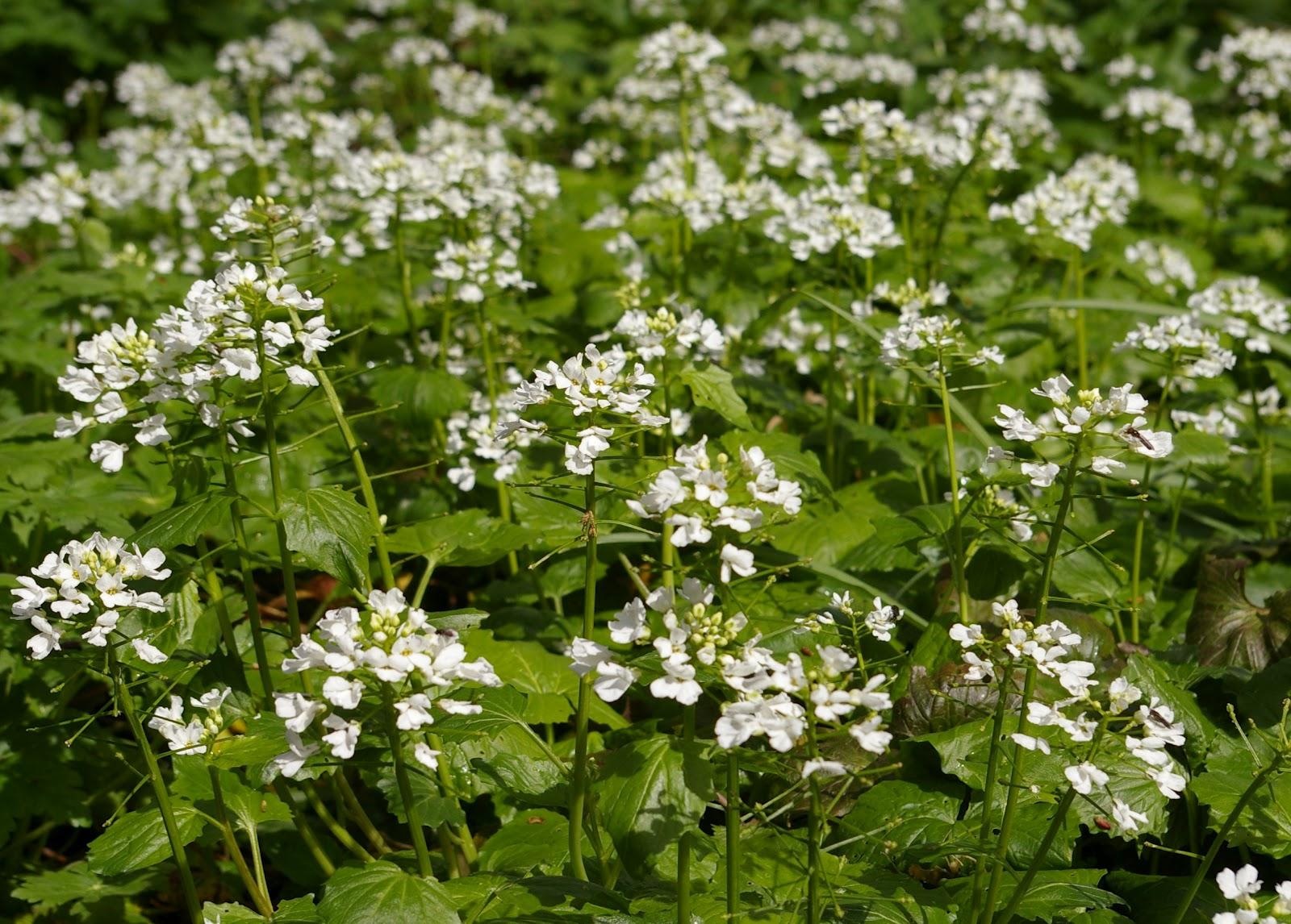 40 Spring Flowering Plants For Your Garden Lismore Castle Gardens